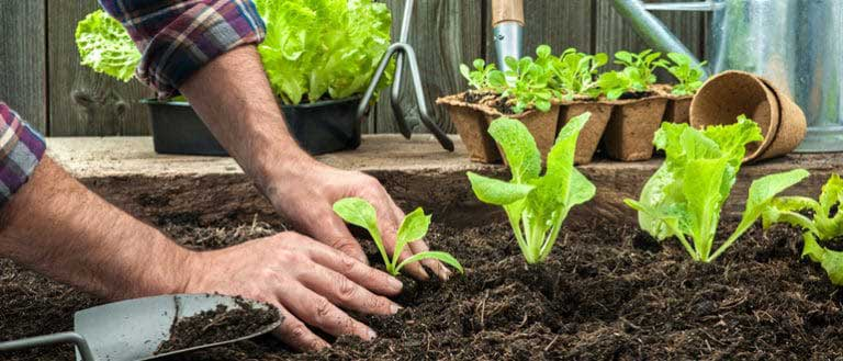 Know how organic fertilizer are help to remove toxic from air (Bagbani)