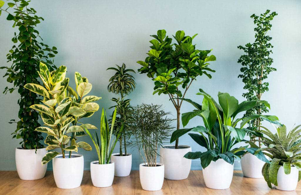 10 HOUSEPLANTS TO STUFF YOUR HOME WITH CHIC AROMA THIS WINTER (Bagbani)