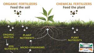Know how organic fertilizer are help to remove toxic from air - Bagbani