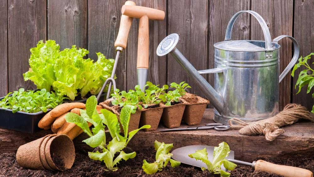 5 Benefits of home garden (Bagbani)