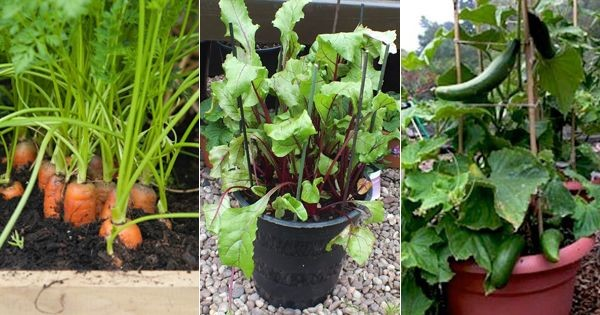 Vegetable Balcony Garden | Bagbani | Gardening Blogs