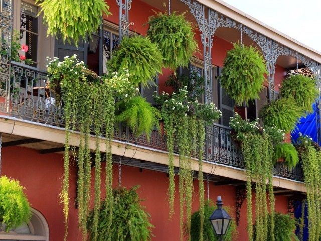 Creeper Balcony garden | Bagbani | Gardening Blogs