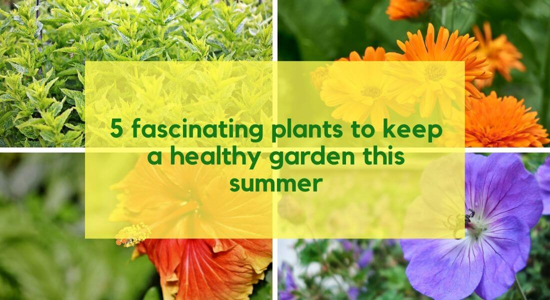 5 fascinating plants to keep a healthy garden this summer | Bagbani